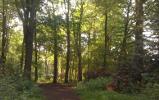 Moorlands Wood Nature Reserve, Moor Lane, near Yorknear York